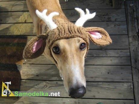 Как сделать из собаки новогоднего оленя