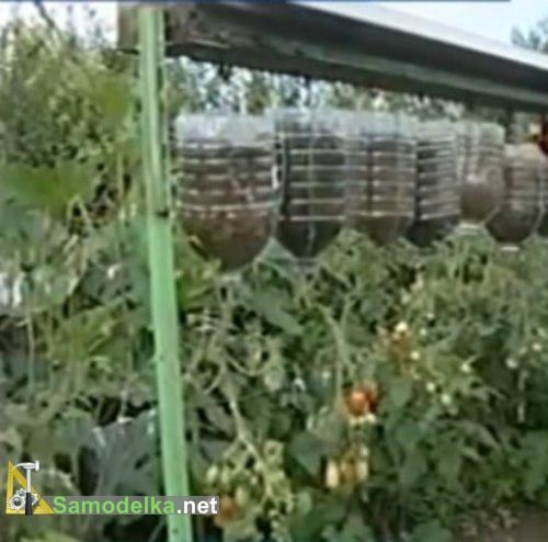 помидоры вверх корнями в бутылках