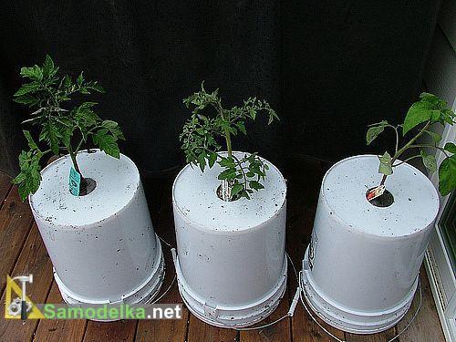 Помидоры вверх корнями плюсы и минусы такого способа выращивания