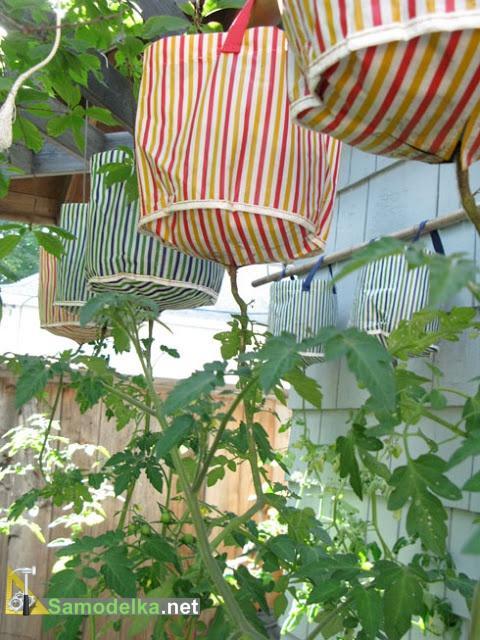 томаты вверх корнями в сумках