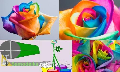 покраска розы