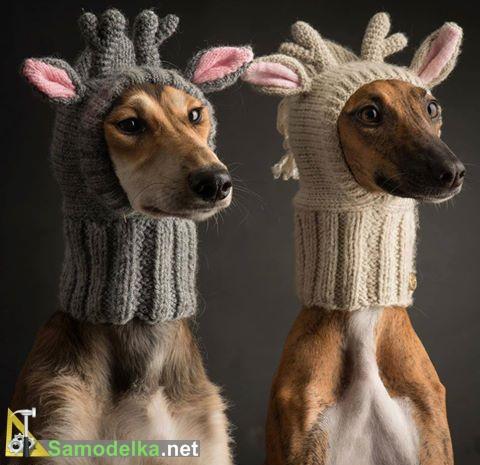 собаки олени в вязанных шапочках