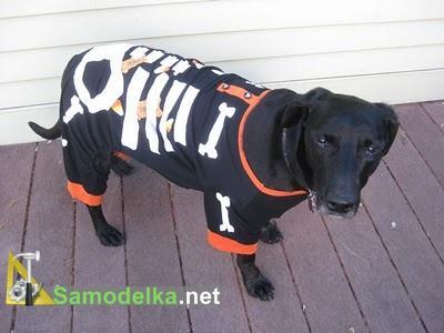 Костюм собаки на хеллоуин