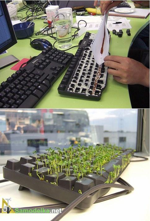 проросшая клавиатура