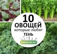 10 овощей для посадки в тени