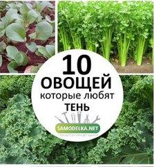 10 Овощей, которые любят тень