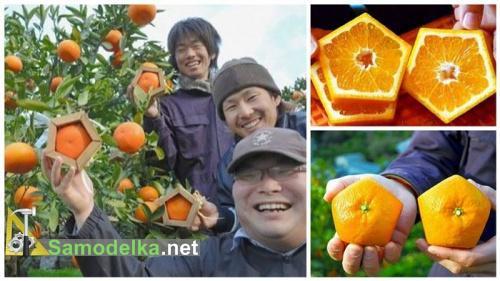 Как вырастить апельсин в форме пентагона