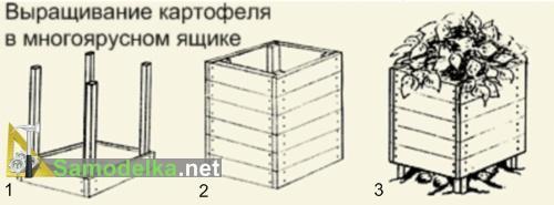 Картофель в ящике - как вырастить мешок картошки на квадратном метре