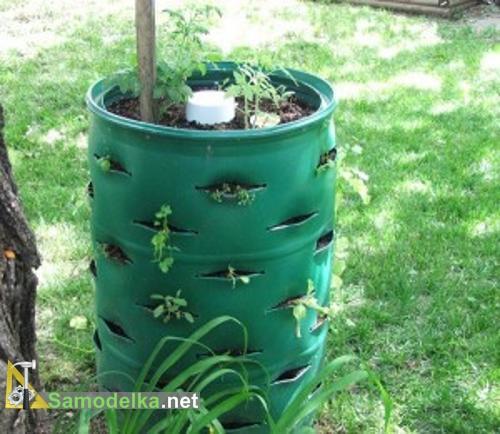 выращивание помидоров в бочке