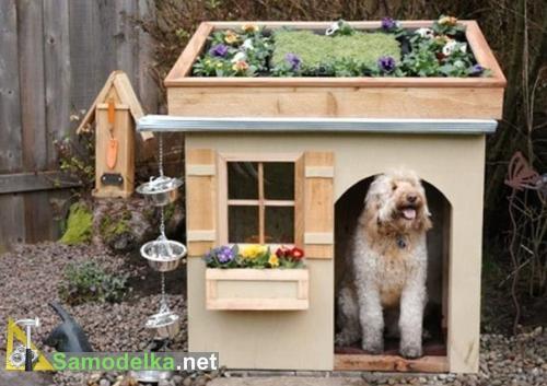 собачья будка с клумбой на крыше