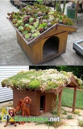 собачий домик с зеленой крышей