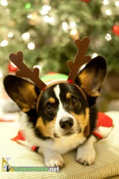 собака олень новогодняя