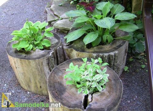 Горшки для сада из деревянных пней