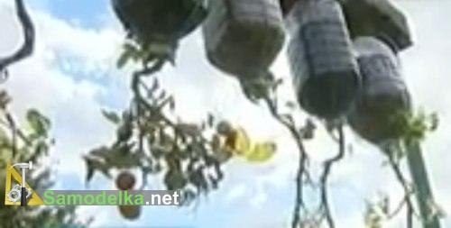 помидоры вверх корнями в пластиковых бутылках