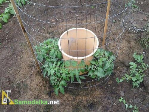 как правильно поливать помидоры в открытом грунте