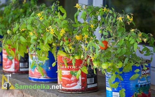 какие овощи можно вырастить на балконе - помидоры