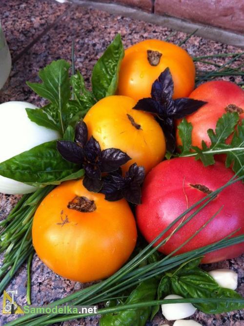помидрки и зелень